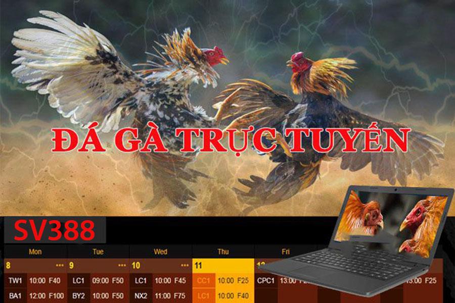 Đá gà trực tuyến SV388